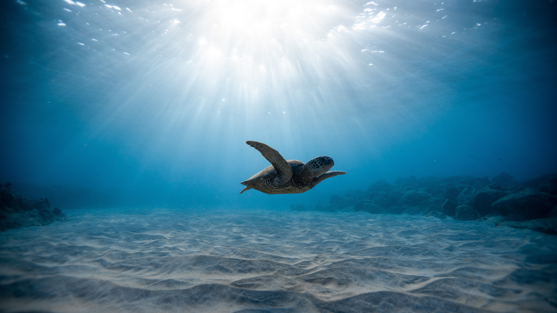 Turtle in sea - contact us
