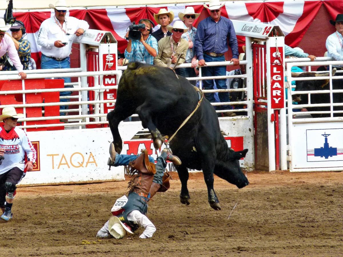 stampede_calgary_bull_riding